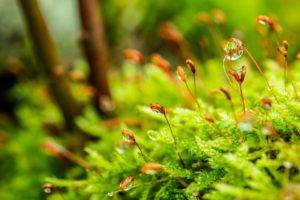 青々と茂る草