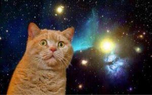 宇宙の中でビックリした顔の猫