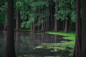 茂みの奥に浮かぶ湖