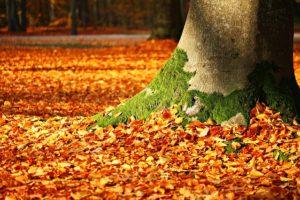 足元に落ちたもみじの葉