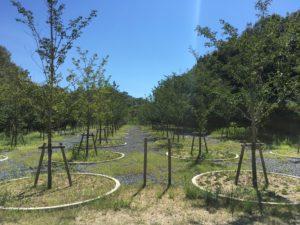 直島の謎アート